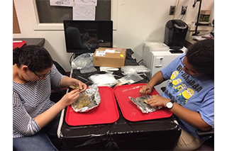 Undergraduate student volunteers help clean and process animal remains in the Zooarchaeology Lab