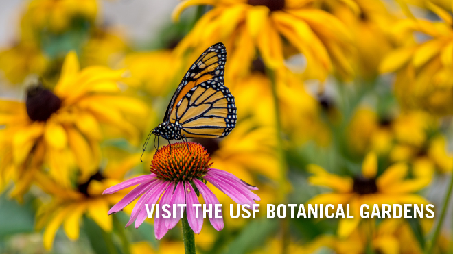 Visit the USF Botanical Gardens