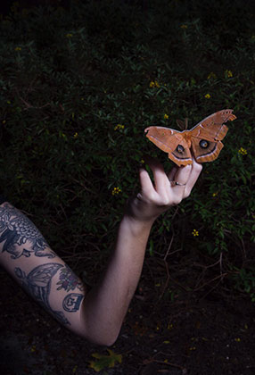 Photo of a butterly perched on a hand in front of a dimly lit hedge.