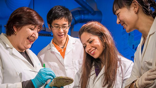 Photo of Professor Alcantar and three of her students analyzing a cactus.