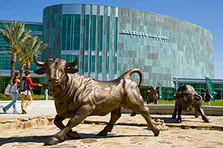 Bull statues in front of the USF Marshall Student Center in Tampa, Florida.
