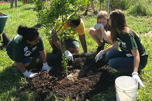 USF students volunteering at a local community garden last semester as part of the Week of Welcome activities.
