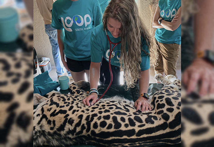 USF Junior, Hunter Gaias, performs a routine medical examination on a Cheetah at Feracare Wildlife Center in South Africa..