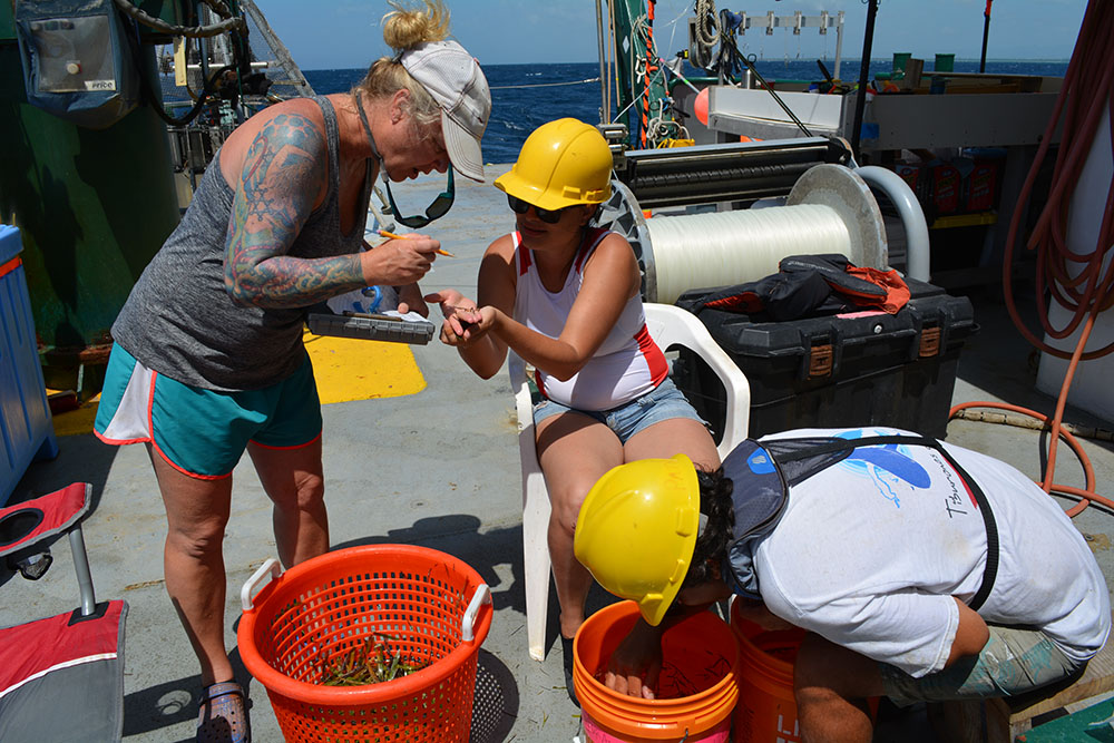 Dr. Erin Pulster with USF identifies specimens with Mexican colleagues from the National Autonomous University of Mexico on the RV Weatherbird.