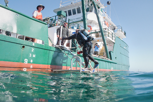 A diver from the USF College of Marine Science going into the Gulf Mexico to conduct research