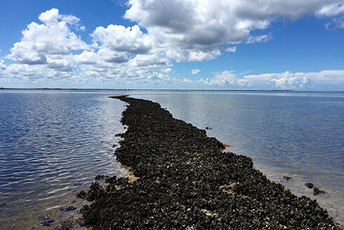 Offshore oyster reefs in Florida's Big Bend region