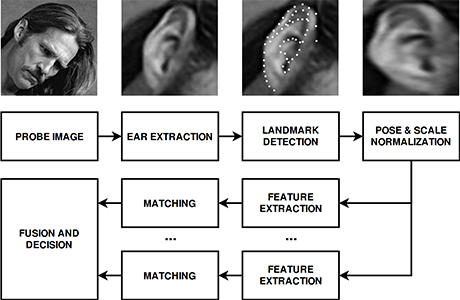 A USF team which specializes in biometrics identification developed a new system to accurately identify ear shapes. The technology is an alternative to more common biometrics such as fingerprint, face and iris recognition technology.