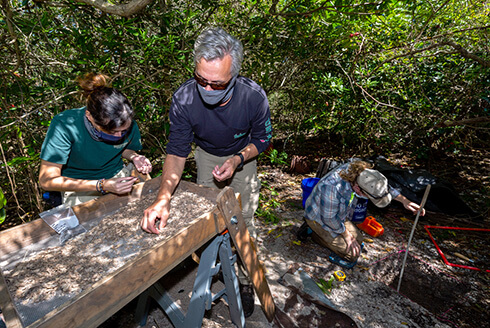 Archaeology professor, Thomas Pluckhahn, shifts through soil samples with undergraduate student in Terra Ceia Preserve State Park.