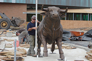 Construction worker with bull