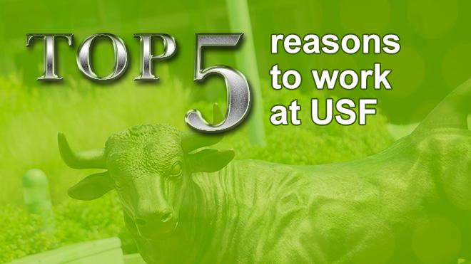 "USF Bull in green overlay with ""Top 5 reasons to work at USF"" on it"