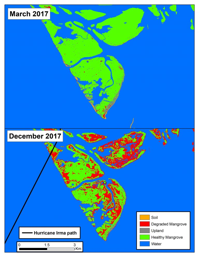 Damage to mangroves caused by Hurricane Irma in September 2017.