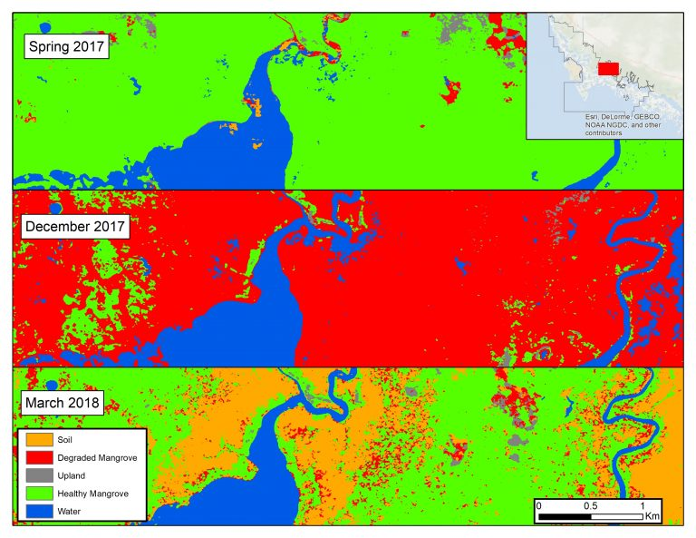Subset of the study area (inset map) reflecting the various stages of mangrove change. Healthy mangroves dominate the reserve in early 2017 (top) but they were largely degraded after the hurricane (center), and either recovered or died by the spring of 2018 (bottom).